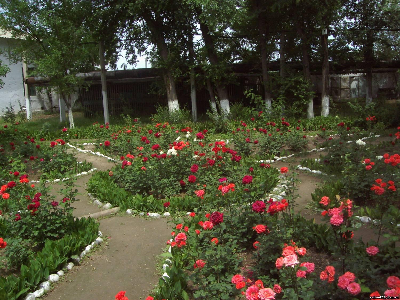 Фото квітників на дачі 6 фотография